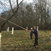 NFH-Baumpflege-Streuobstwie